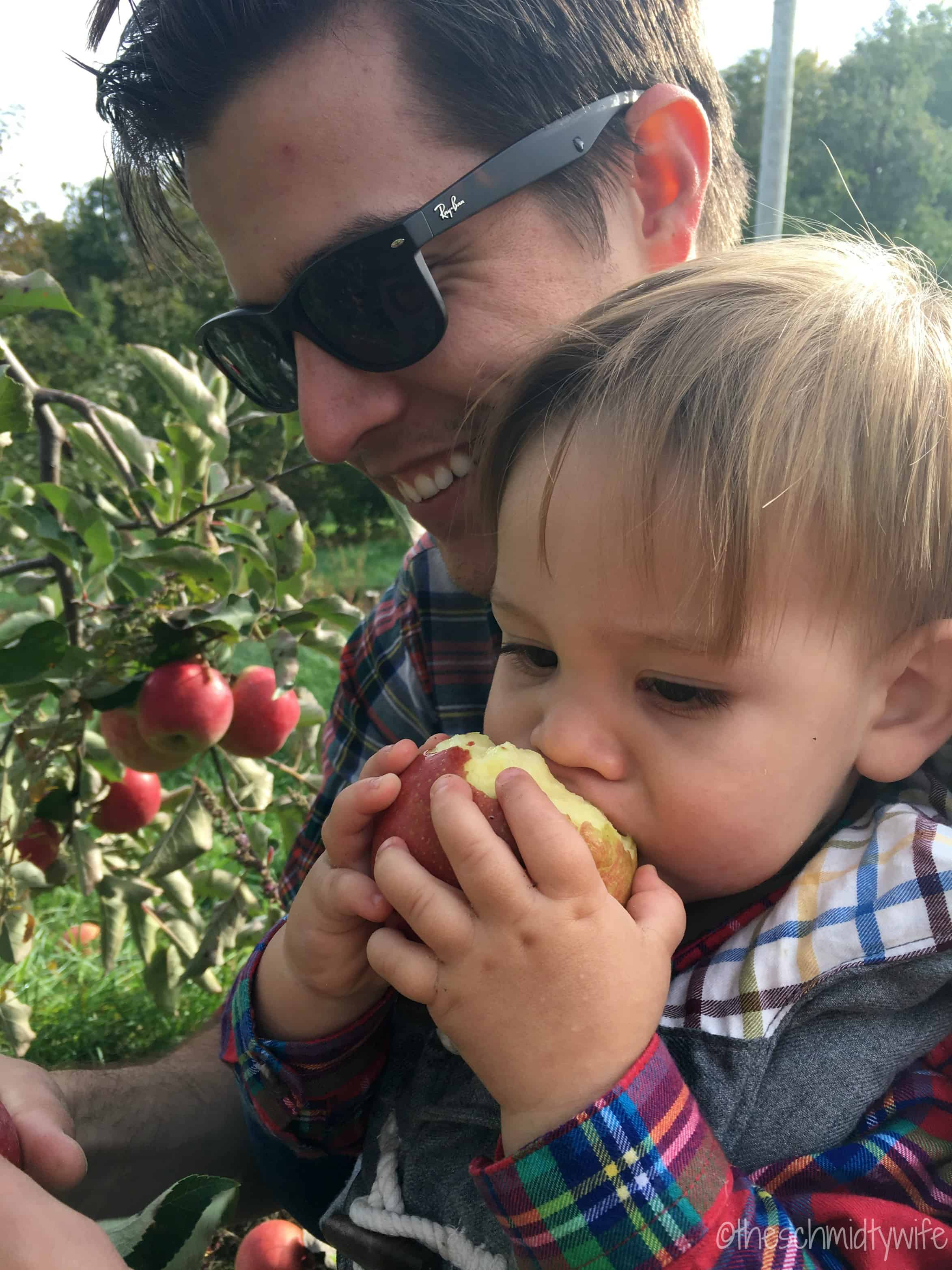 toddler eating apple in orchard
