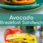 avocado, tomato, and cheddar breakfast sandwich sitting on a teal plate